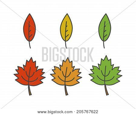 Colorful leaves of different shape flat style vector icon isolated on white set. Autumn defoliation concept. Deciduous tree leaf cartoon illustration for applications, logos or web design