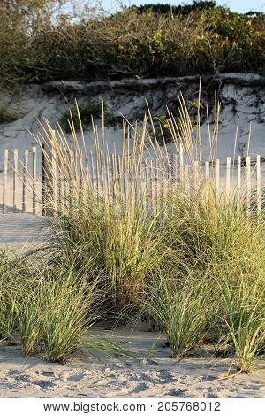 Tall sea grass and snow fence on the shoreline to stem beach erosion.