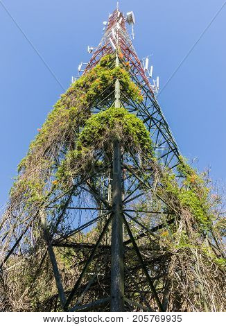 Large telecomunication tower with the plant on the metal structure of the communication station.