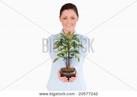 Gut aussehende Rothaarige Frau hält eine Zimmerpflanze stehen