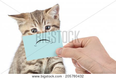 funny unhappy cat portrait isolated on white
