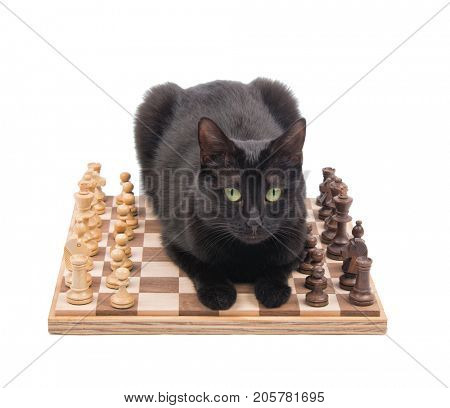 Black cat lying down in the middle of a chess game, looking at the viewer, isolated on white