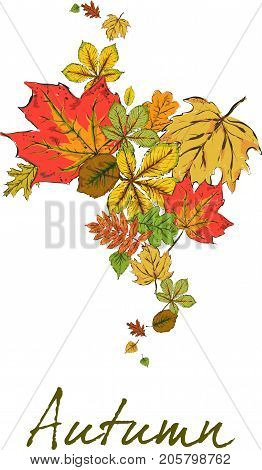 Postcard With Colorful Autumn Leaves. The Leaves Are Falling. Abstract. Autumn Background. Hand Draw