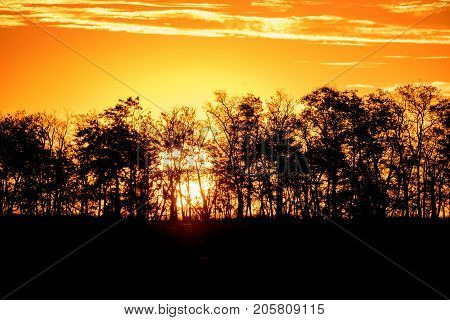 Silhouttes of trees on orange background of sunset