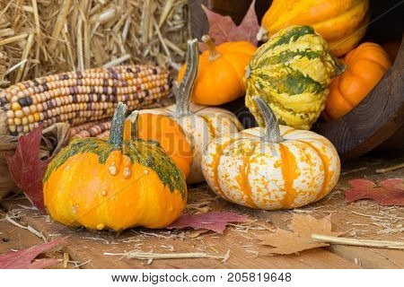 Colorful autumn pumpkins and gourds spilled onto a wooden surface