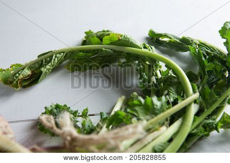 Close-up of turnips on table