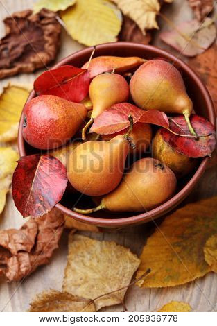 Pears. Pears Harvest. Fresh Organic Pears In Clay Plate With Autumn Leaves On Wooden Table. Pear Aut