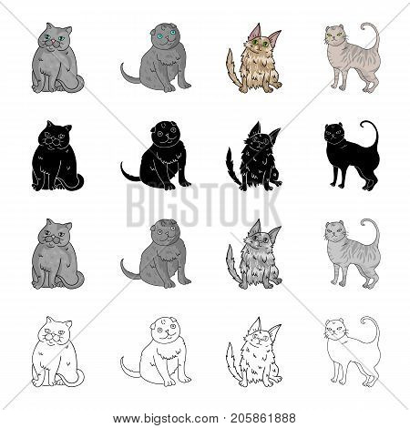 Cat breed Exotic shorthair, Scottish fold, Turkish Angora, British. Different breeds of cat set collection icons in cartoon black monochrome outline style vector symbol stock illustration .