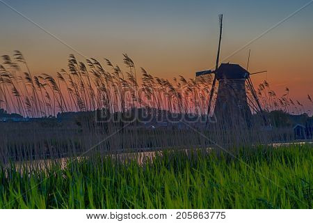 Picturesque Image of Historic Dutch Windmill In Front of The Canal and Ears of Wheat Located in Traditional Village in Holland The Netherlands. Shot at Kinderdijk During Golden Hour. Horizontal Image Composition