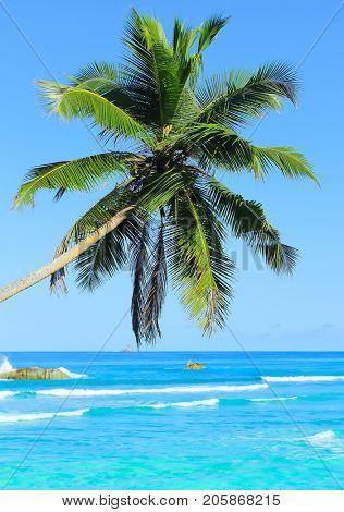 Paradise Beauty Seaside