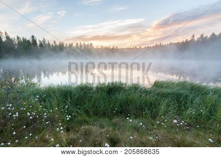 Foggy morning at forest pond landscape Finland