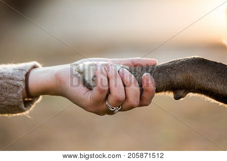 A brown dog shaking hands with a young female married owner on a beautiful warm day.