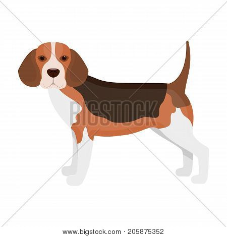 Beagle, single icon in cartoon style.Beagle, vector symbol stock illustration .