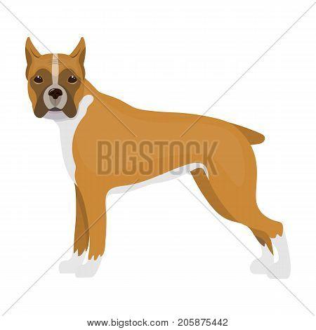 Boxer, single icon in cartoon style.Boxer, vector symbol stock illustration .