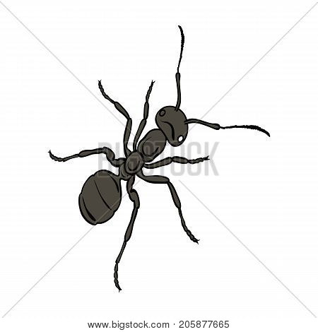 The hymenopteran insect is an ant.Arthropod animal ant single icon in cartoon style vector symbol stock isometric illustration .