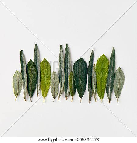 Nature Minimal Concept - Forest Treeline made of green leaves on white background. Flat Lay