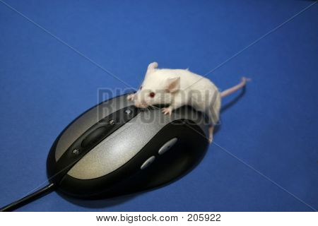 Mouse Using Mouse