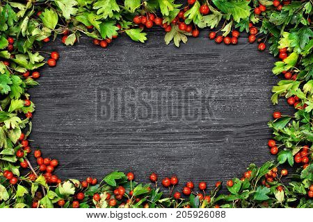 Hawthorn (crataegus) on black wooden table.Autumn berries frame concept.Seasonal background.