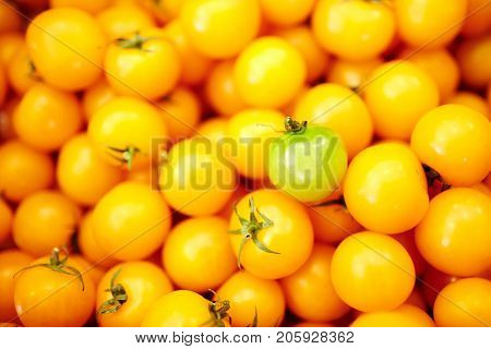 Green tomatoe among heap of yellow ones on marketplace