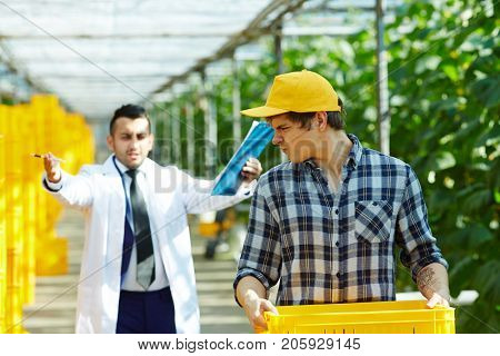 Discontent greenhouse owner with clipboard in hands giving orders in rude manner to his young handsome subordinate carrying plastic crate, blurred background