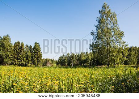 Field and forest far in the background in a summer day