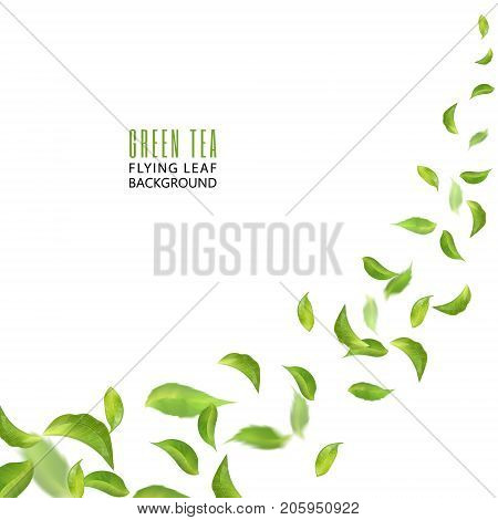 Flying green leaves on white background. Leaves in the wind. Fresh spring foliage. Vector illustration. Tea advertising concept, environment and ecology backdrop