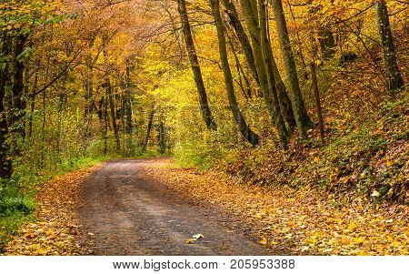 Road Turnaround In Autumn Forest