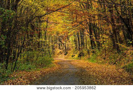 Winding Road Through  Dark Autumn Forest