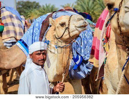 Dubai, United Arab Emirates - March 25, 2016: Camel handler with the animals at Dubai Camel Racing Club