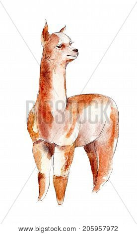 The red alpaca watercolor illustration isolated on white background.