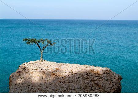 The coast on the island of Socotra Yemen