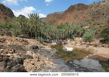 The oasis Wadi Daerhu on the island of Socotra, Yemen