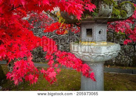 Red maple leaves at buddist temple in Nikko, Japan