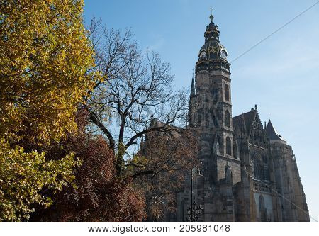 Saint Elisabeth Cathedral (Kosice Slovakia) in autumn season. Yellow tree is in foreground blue sky in background. This is the largest church in Slovakia.