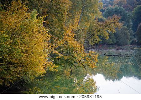 Yellow trees reflect in tranquil water. Autumn scene.
