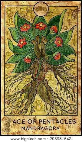 Mandragora. Ace of pentacles. Fantasy Creatures Tarot full deck. Minor arcana. Hand drawn graphic illustration, engraved colorful painting with occult symbols. Halloween background