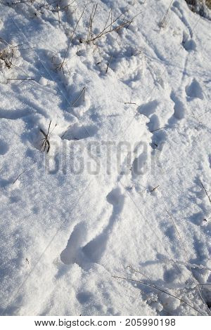 spoor in the snow . In the park in nature