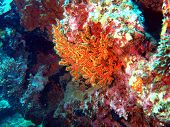 Underwater inhabitants of the South-Chinese sea, soft coral poster