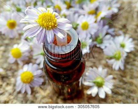 Chamomile Essential Oil Glass Bottle. Essential Chamomile Oil & Medical Flowers Herbs On Sackcloth B