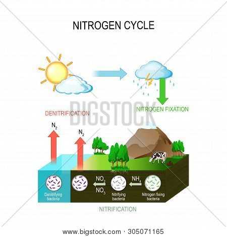 Nitrogen Cycle. The Processes Of The Nitrogen Cycle Transform Nitrogen From One Form To Another. Ill