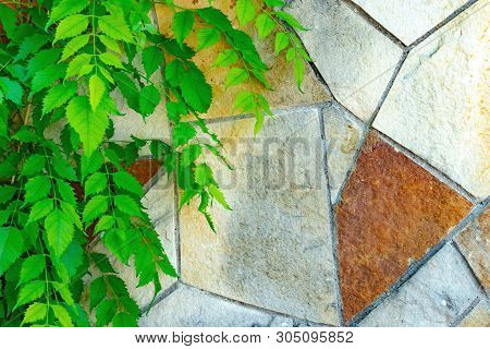 Stock Photo Leaf Texture With Color Wall Background