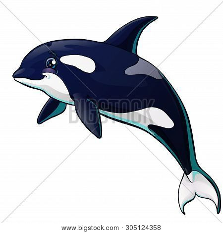 The Killer Whale Jumps On White Background