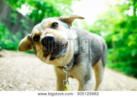 Mixed Breed Dog Eating Titbit, Details Of Biting A Dainty