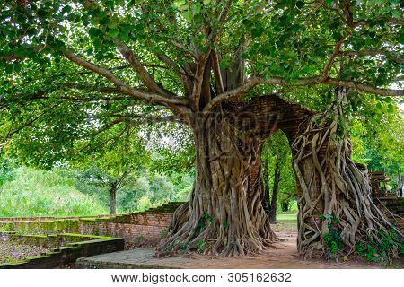 Gate Of Time. Arch Of Bodhi Tree. Unseen Thailand At Wat Phra Ngam, Phra Nakhon Si Ayutthaya, Thaila