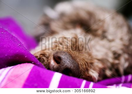 Dog Nose Macro Background High Quality Prints Products 50,6 Megapixels