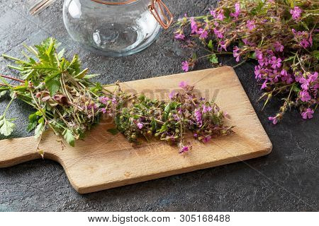 Cut-up Herb-robert, Or Geranium Robertianum Plant - Ingredient To Prepare Homemade Herbal Tincture