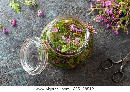 Preparation Of Alcohol Tincture From Fresh Herb-robert Plant