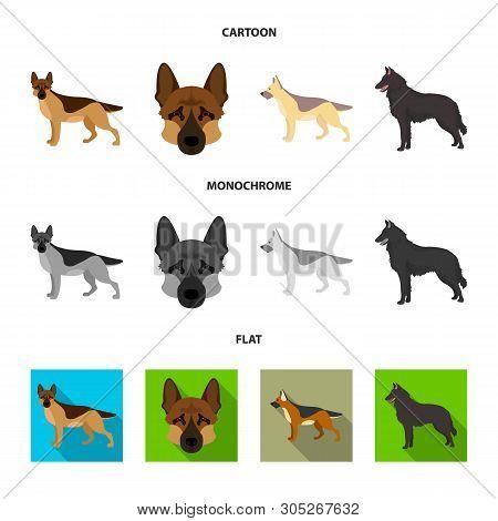 Vector Illustration Of Sheepdog And Sheltie Icon. Collection Of Sheepdog And Shepherd Stock Symbol F