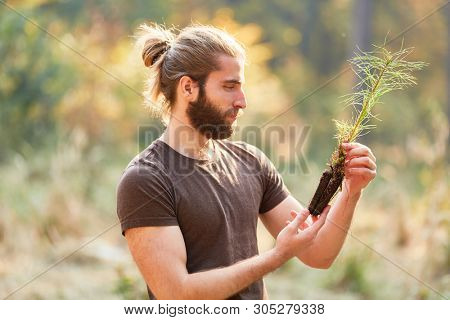 Forest workers or foresters inspected quality of pine seedling for afforestation