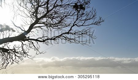Tree Branches Silhouette On A Transperent Sky. Silhouette Of Dark Tree Branches At Sunrise. Tree Sil
